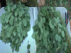 Сборка ветвей веника